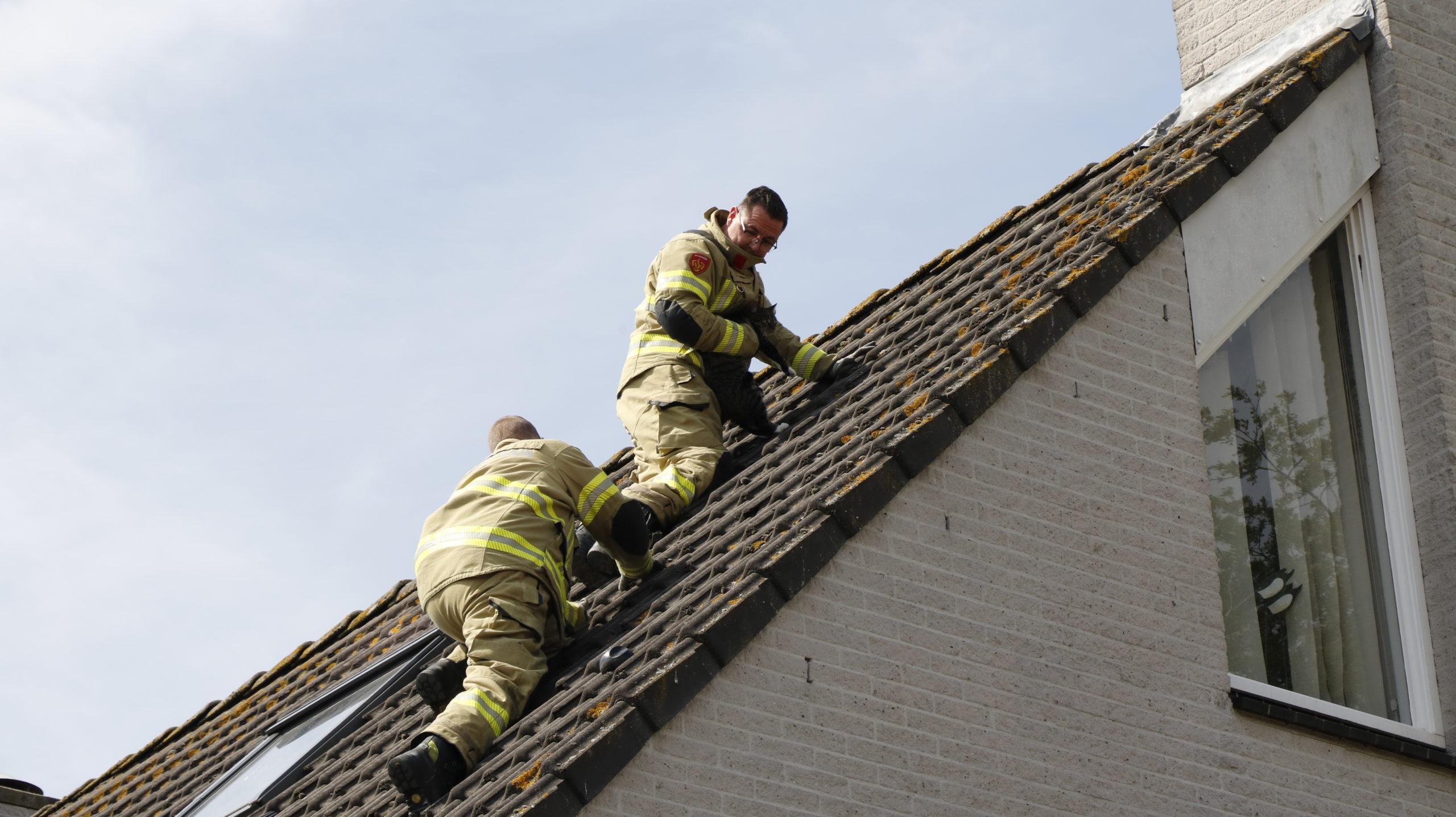 Brandweer haalt kat van het dak.