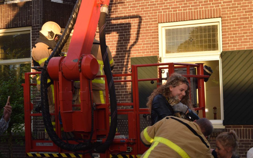 Poes Suus na twee dagen in boom uiteindelijk gered door brandweer en baasje