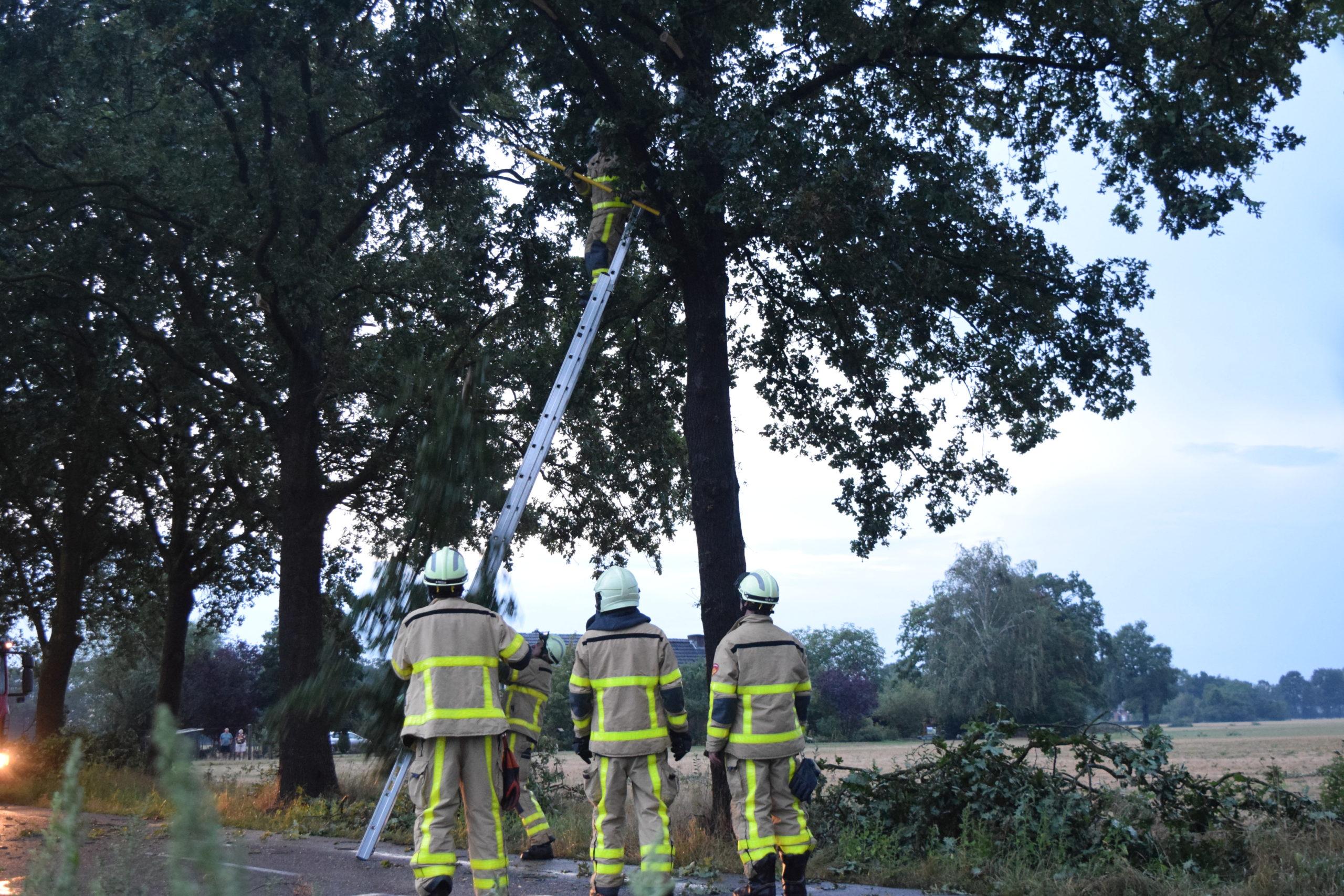Windhoos gaat onder bomen door en veroorzaakt veel loshangende takken over een flinke lengte